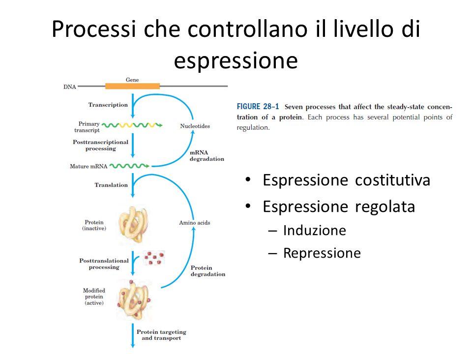 Processi che controllano il livello di espressione