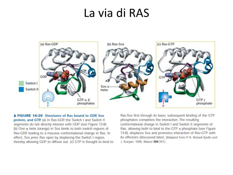 La via di RAS