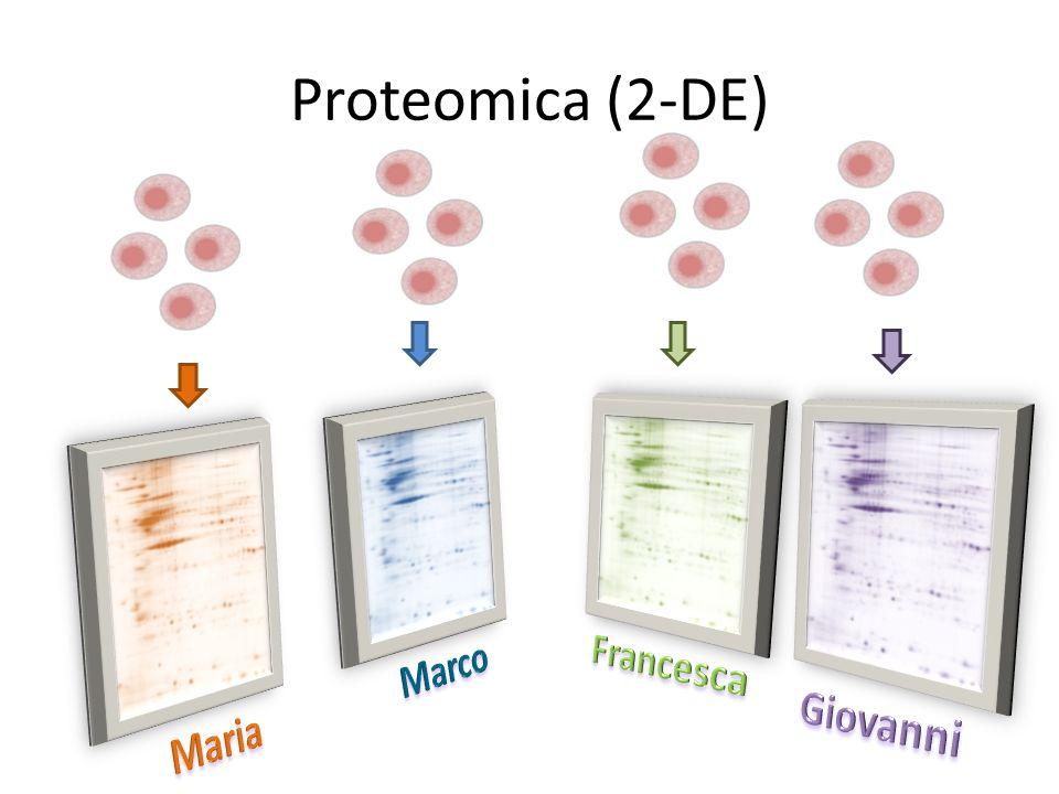 Proteomica (2-DE) Marco Francesca Giovanni Maria
