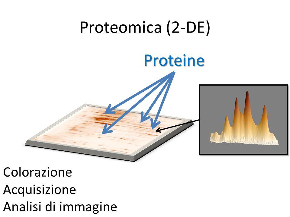 Proteomica (2-DE) Proteine Colorazione Acquisizione