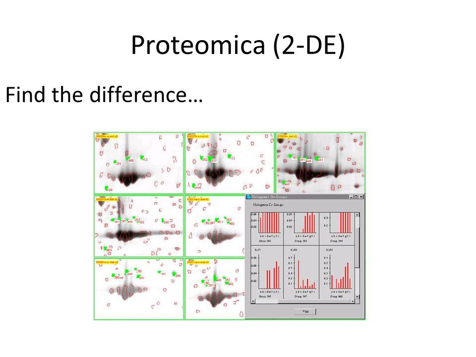 Proteomica (2-DE) Find the difference…