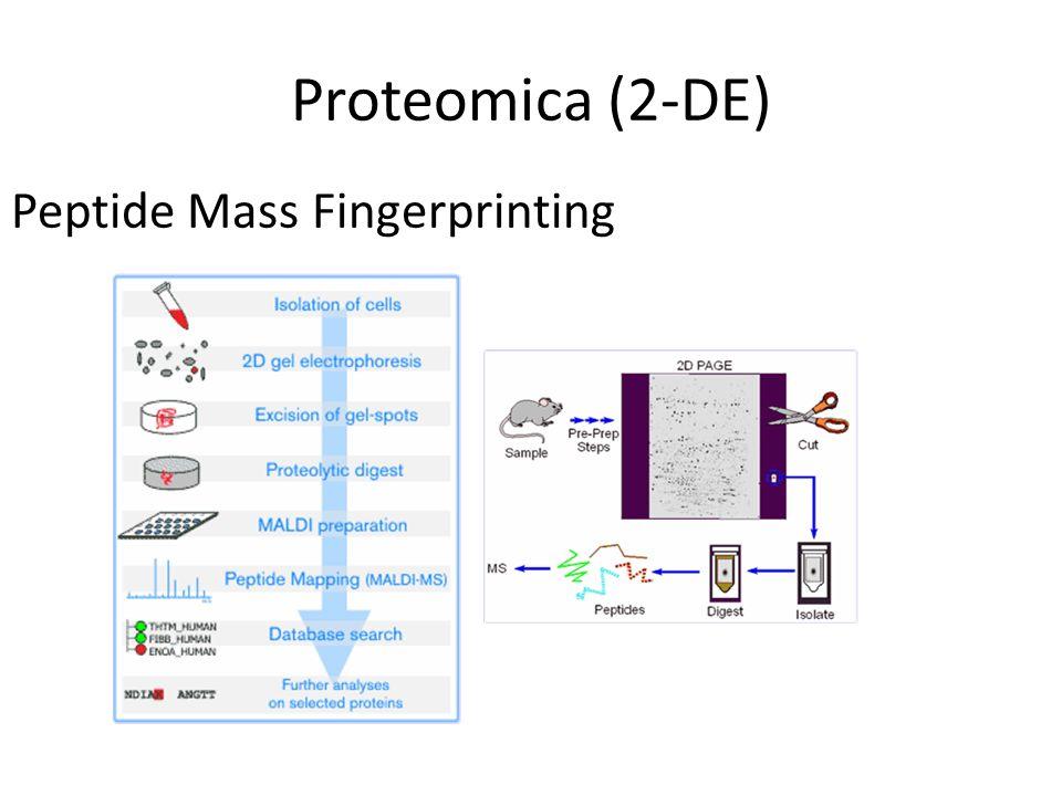 Proteomica (2-DE) Peptide Mass Fingerprinting