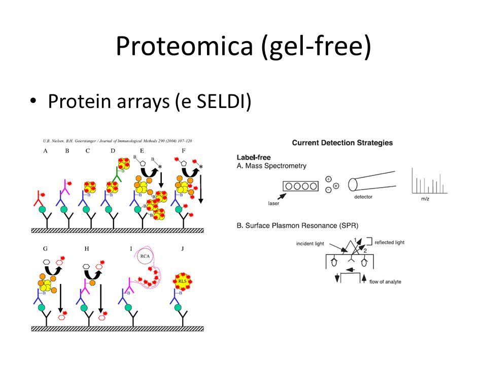 Proteomica (gel-free)