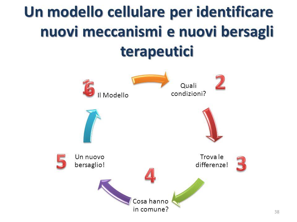 Un modello cellulare per identificare nuovi meccanismi e nuovi bersagli terapeutici