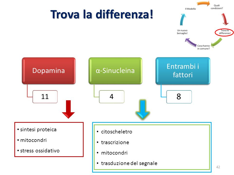 Trova la differenza! 8 Dopamina 11 α-Sinucleina 4 Entrambi i fattori