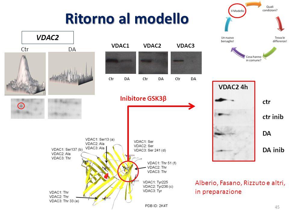 Ritorno al modello VDAC2 VDAC2 4h Inibitore GSK3β ctr ctr inib DA