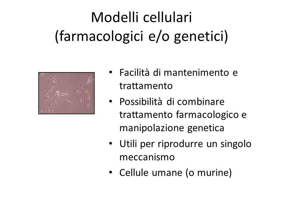 Modelli cellulari (farmacologici e/o genetici)