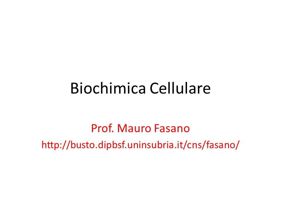 Prof. Mauro Fasano http://busto.dipbsf.uninsubria.it/cns/fasano/