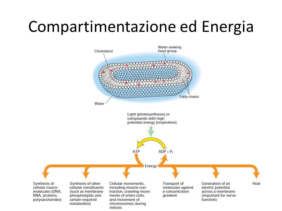 Compartimentazione ed Energia