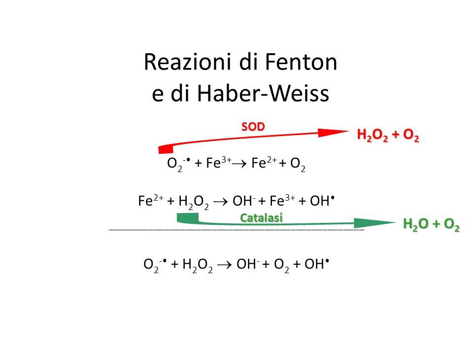 Reazioni di Fenton e di Haber-Weiss