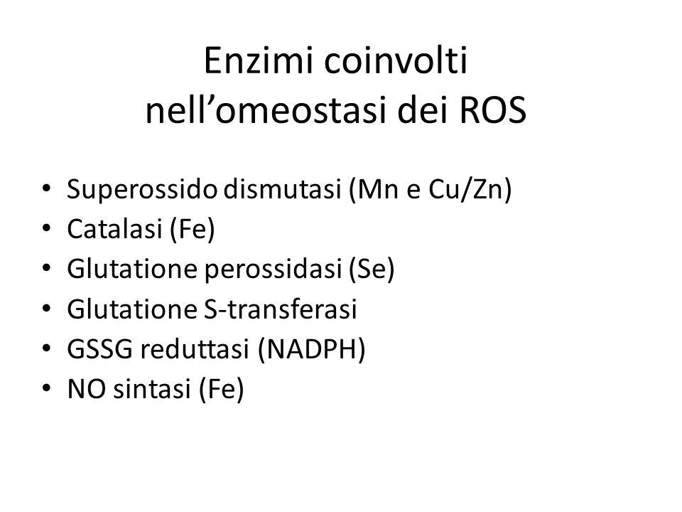 Enzimi coinvolti nell'omeostasi dei ROS
