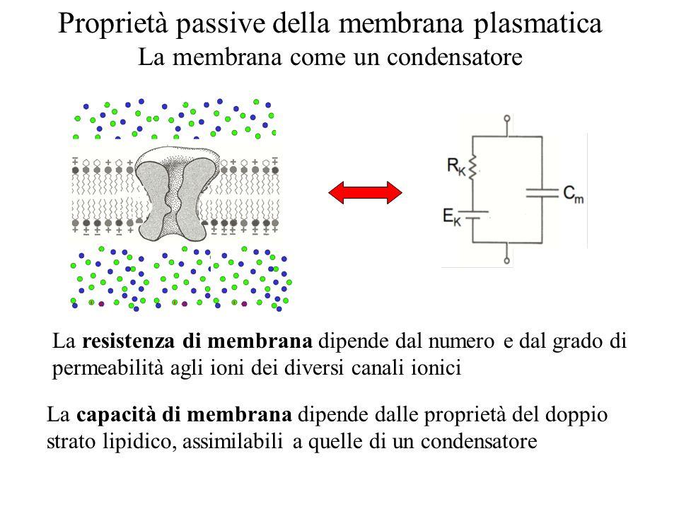 Proprietà passive della membrana plasmatica