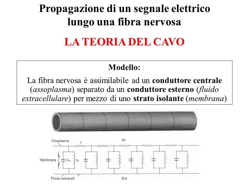 Propagazione di un segnale elettrico lungo una fibra nervosa