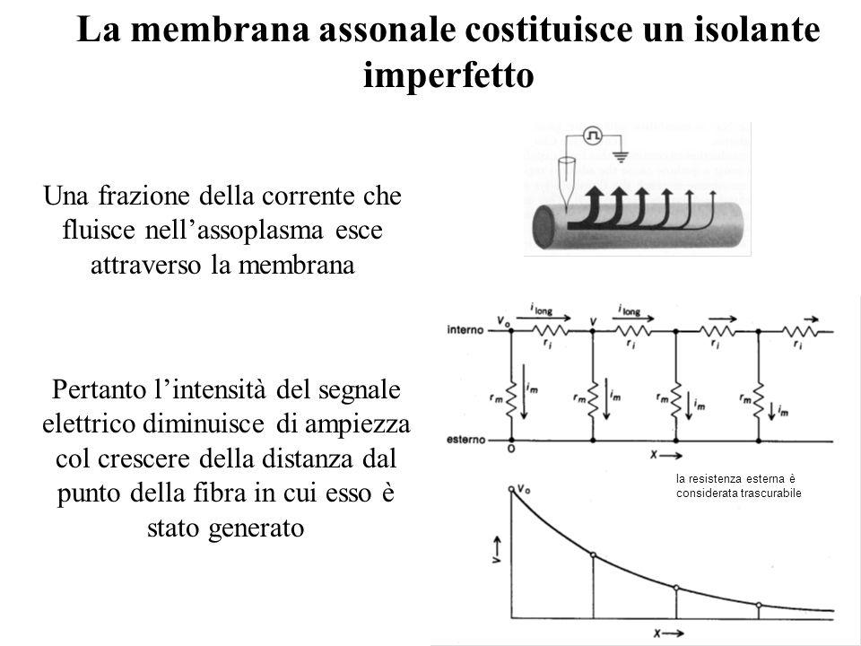 La membrana assonale costituisce un isolante imperfetto