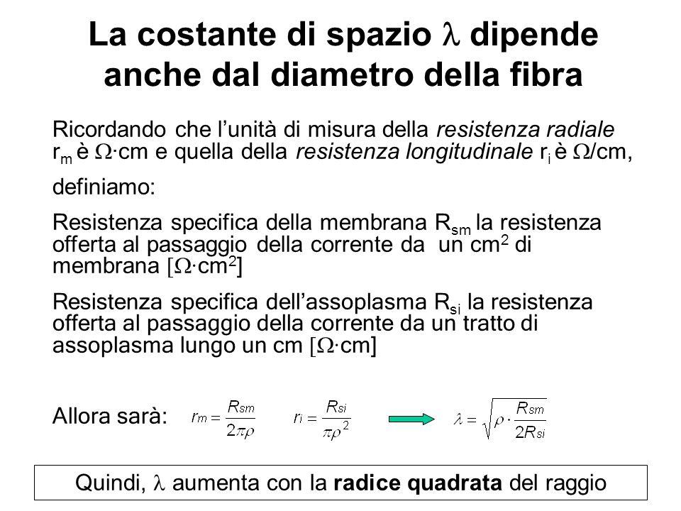 La costante di spazio l dipende anche dal diametro della fibra