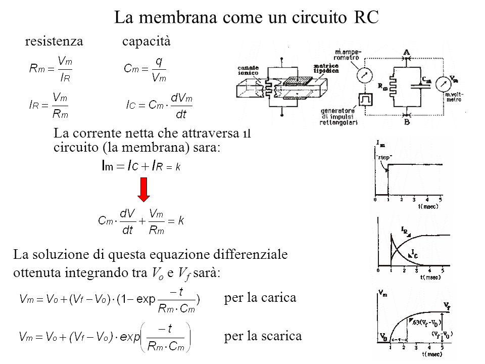 La membrana come un circuito RC
