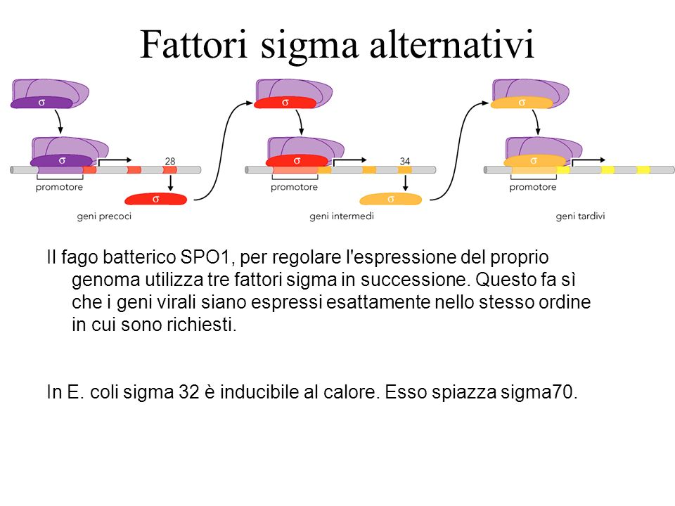 Fattori sigma alternativi