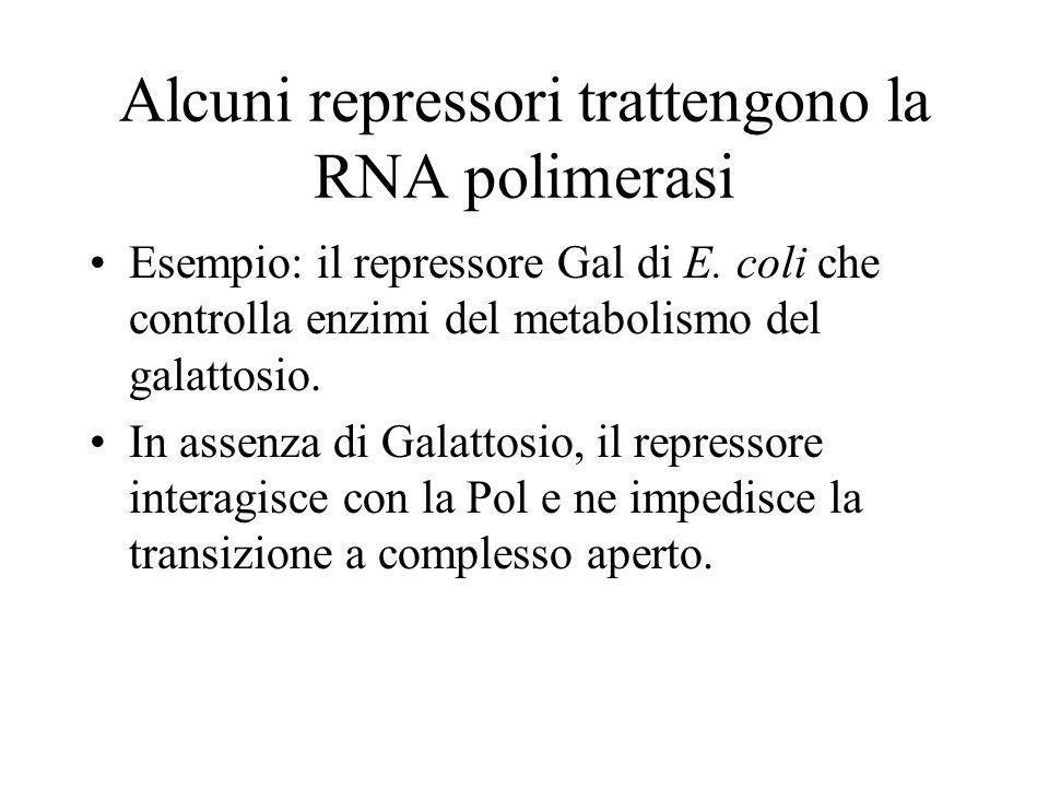 Alcuni repressori trattengono la RNA polimerasi