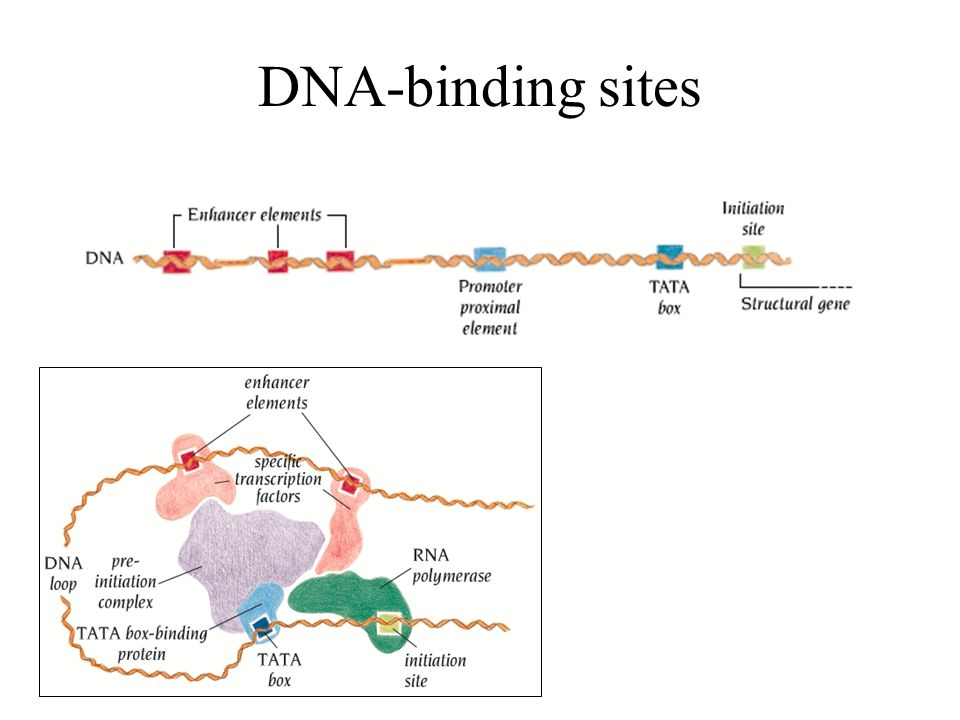 DNA-binding sites