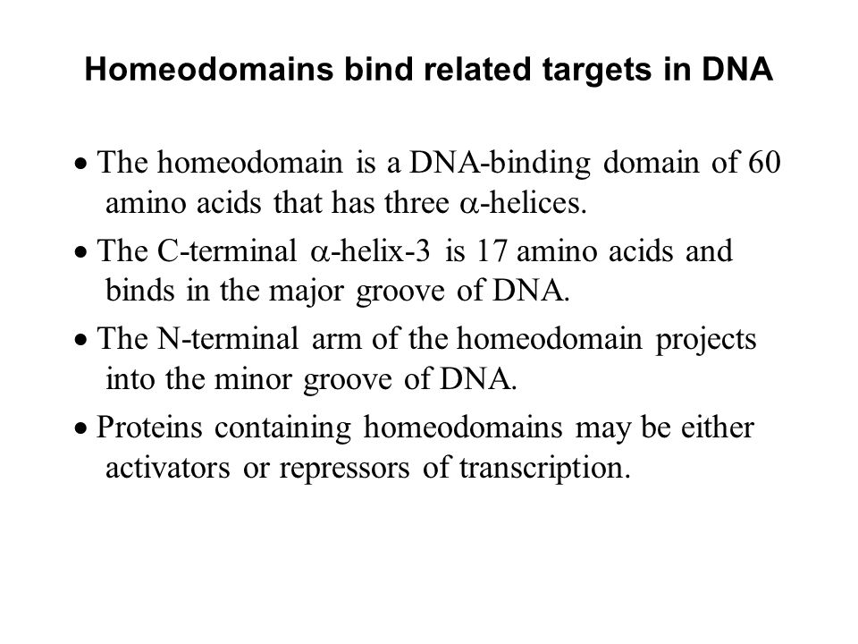 Homeodomains bind related targets in DNA
