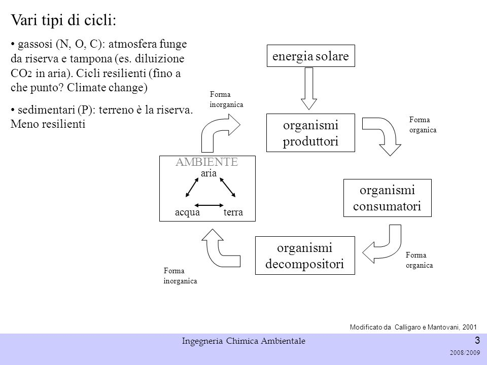Vari tipi di cicli: energia solare organismi produttori