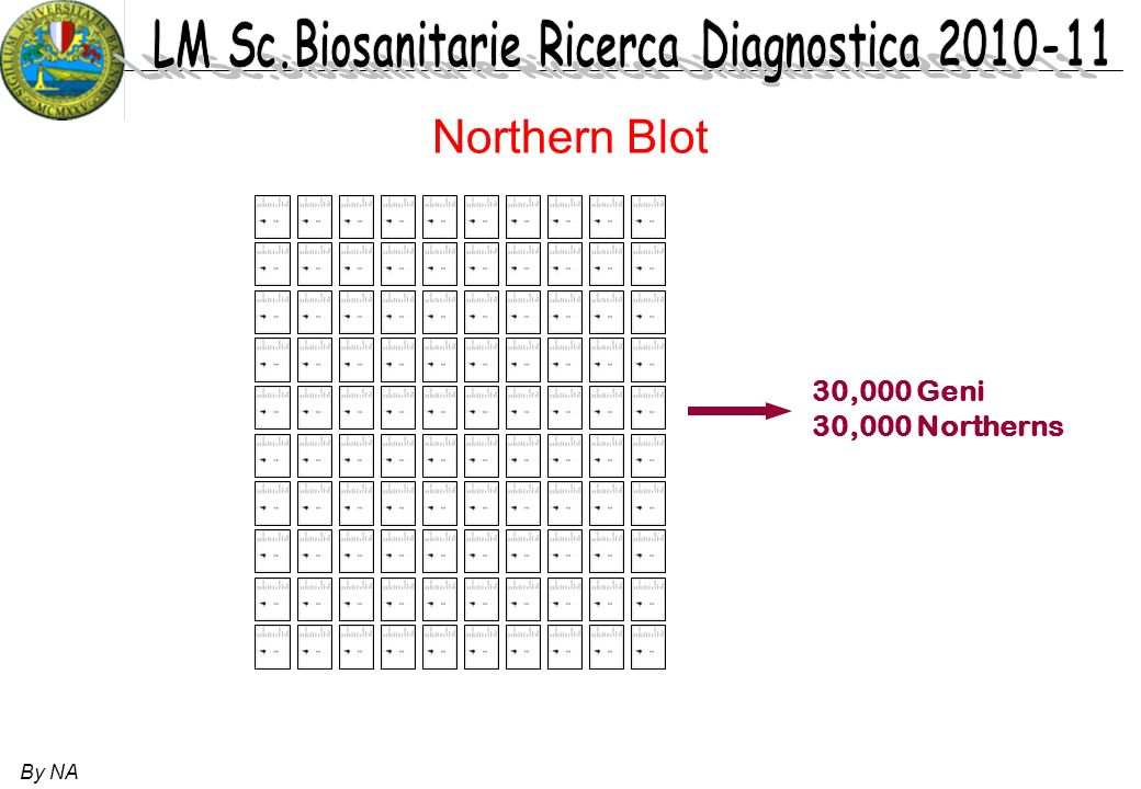 Northern Blot 30,000 Geni 30,000 Northerns By NA 26