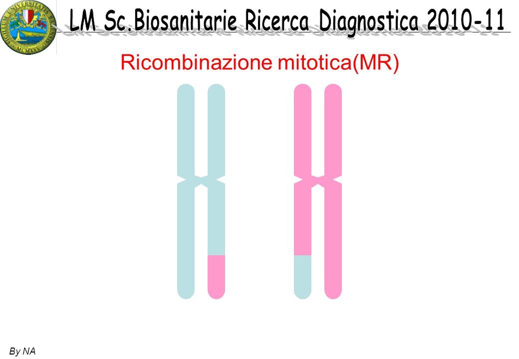 Ricombinazione mitotica(MR)