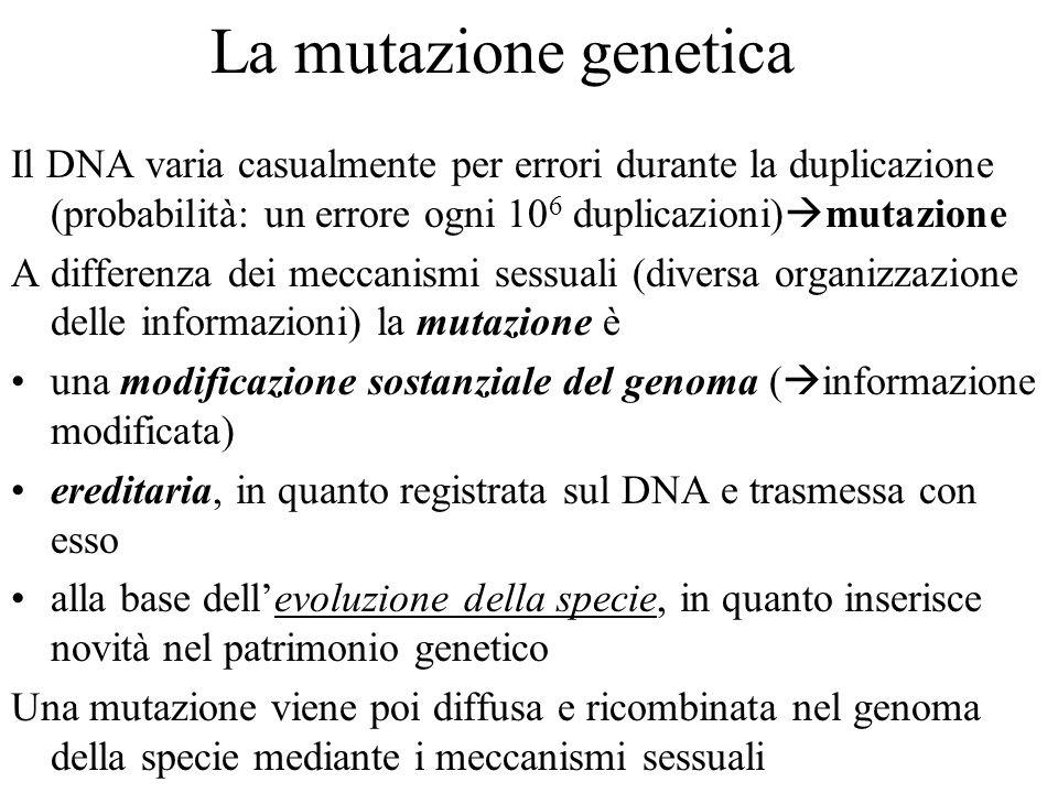 La mutazione genetica Il DNA varia casualmente per errori durante la duplicazione (probabilità: un errore ogni 106 duplicazioni)mutazione.