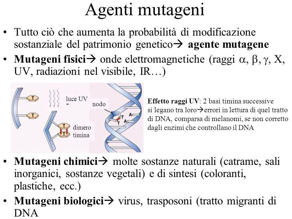 Agenti mutageni Tutto ciò che aumenta la probabilità di modificazione sostanziale del patrimonio genetico agente mutagene.