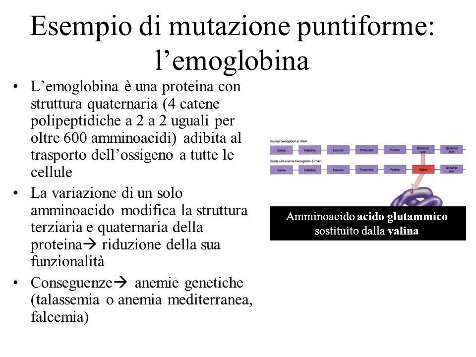 Esempio di mutazione puntiforme: l'emoglobina
