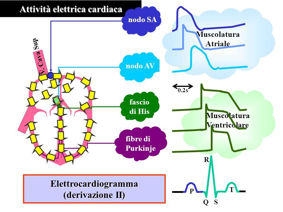 Attività elettrica cardiaca