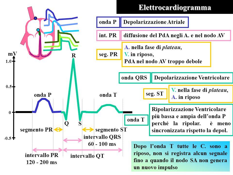 Elettrocardiogramma onda P Depolarizzazione Atriale int. PR