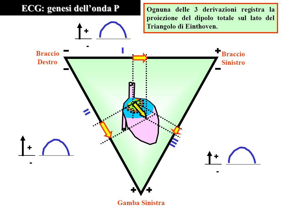ECG: genesi dell'onda P