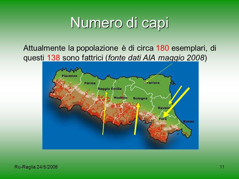 Numero di capi Attualmente la popolazione è di circa 180 esemplari, di questi 138 sono fattrici (fonte dati AIA maggio 2008)