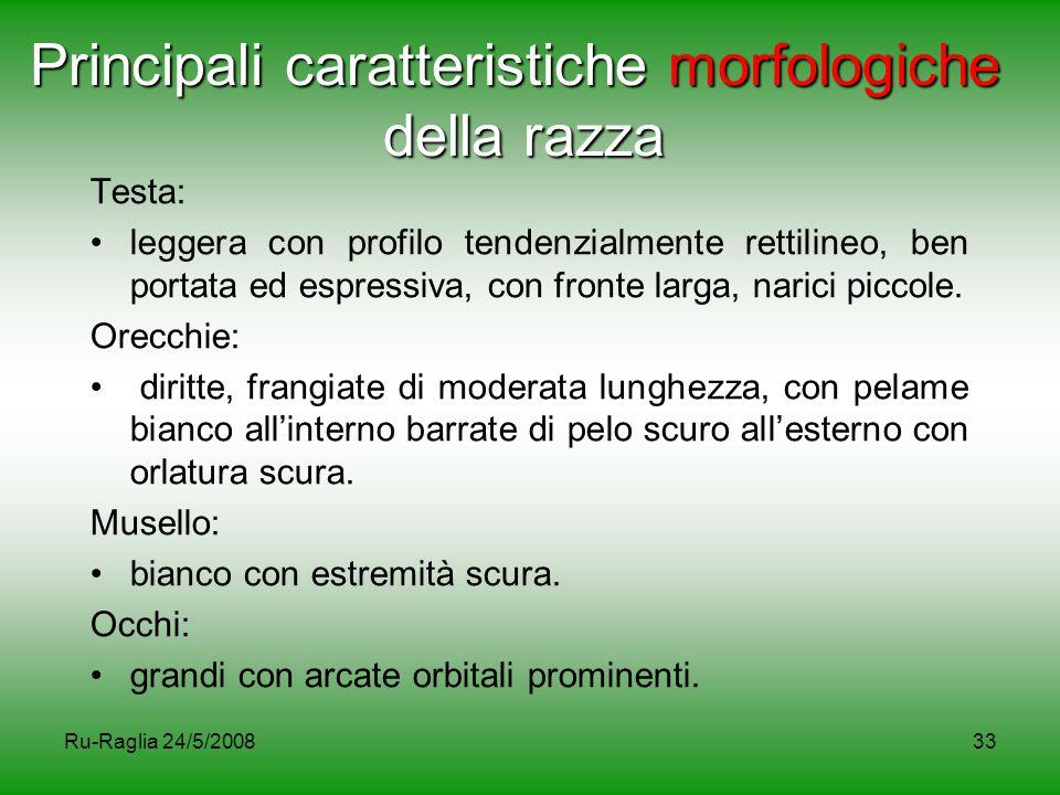 Principali caratteristiche morfologiche della razza
