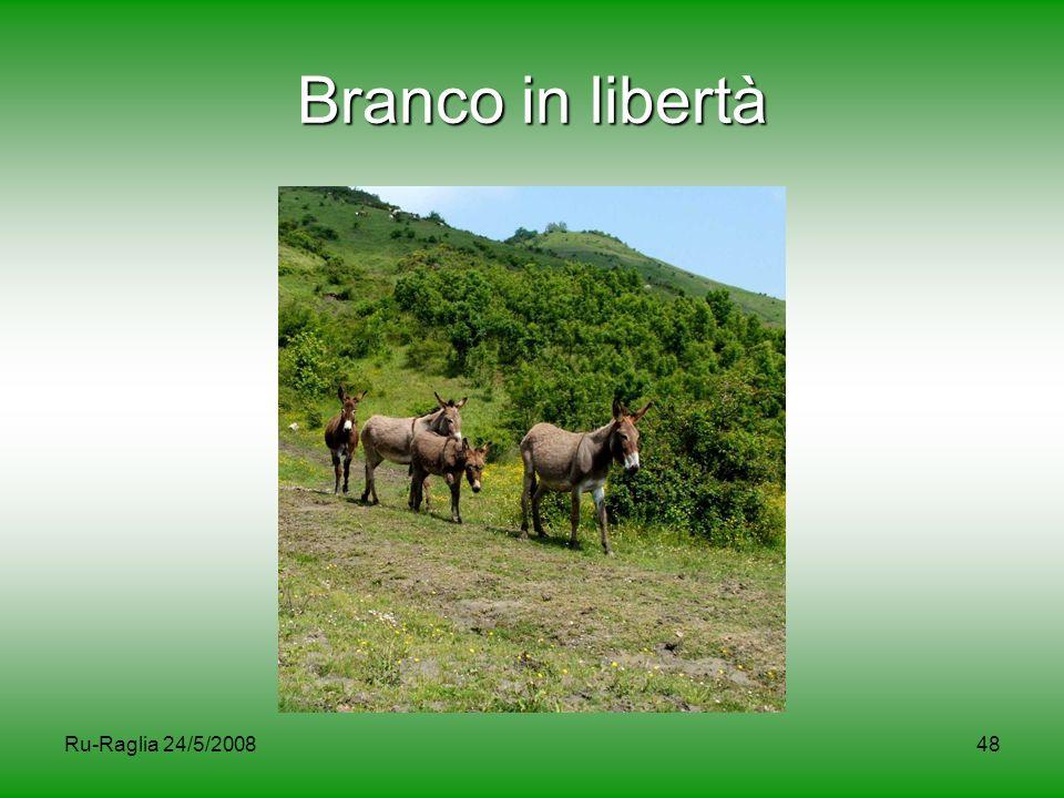 Branco in libertà Ru-Raglia 24/5/2008