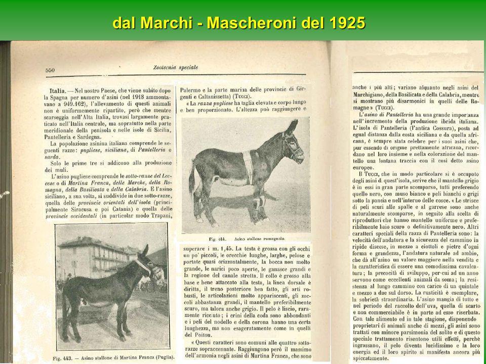 dal Marchi - Mascheroni del 1925