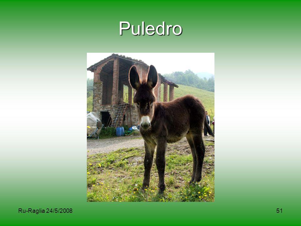 Puledro Ru-Raglia 24/5/2008