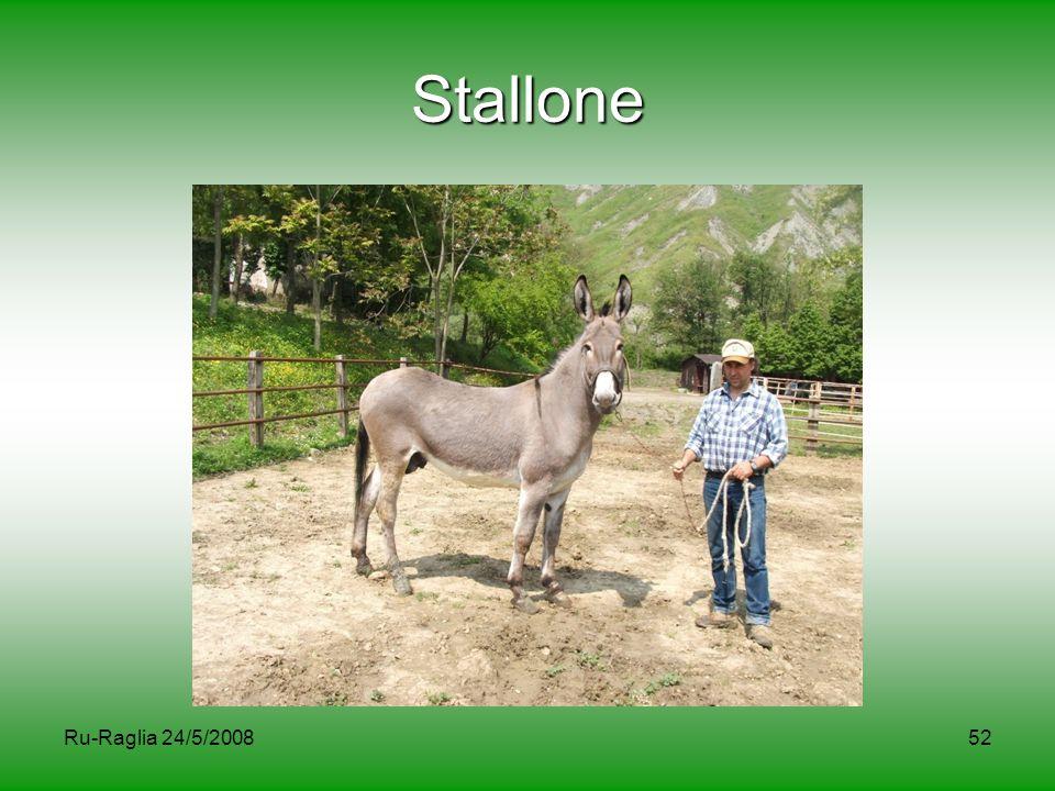 Stallone Ru-Raglia 24/5/2008
