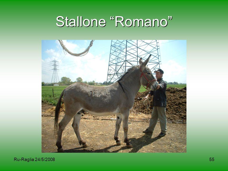 Stallone Romano Ru-Raglia 24/5/2008
