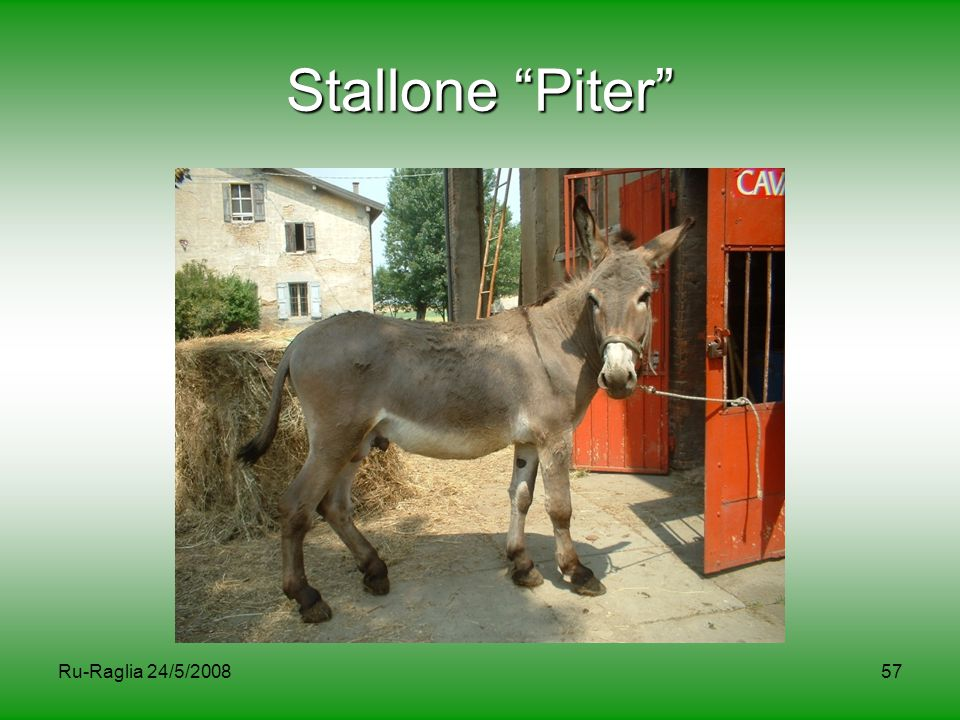 Stallone Piter Ru-Raglia 24/5/2008