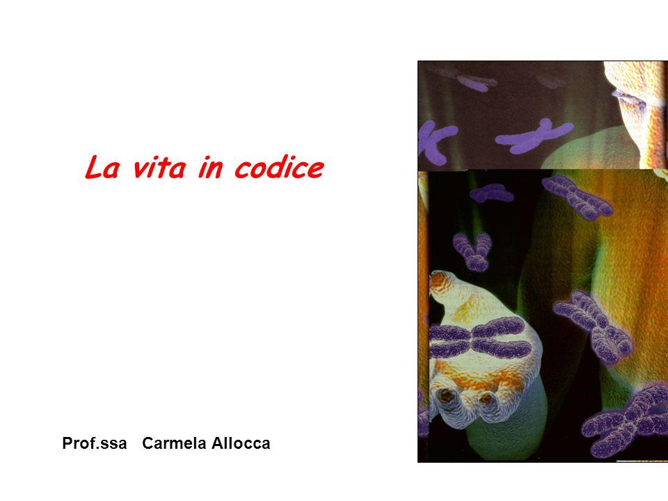 La vita in codice Prof.ssa Carmela Allocca