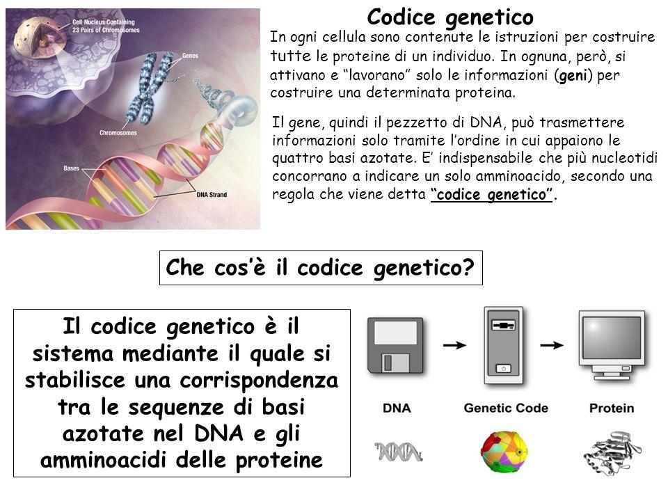 Che cos'è il codice genetico