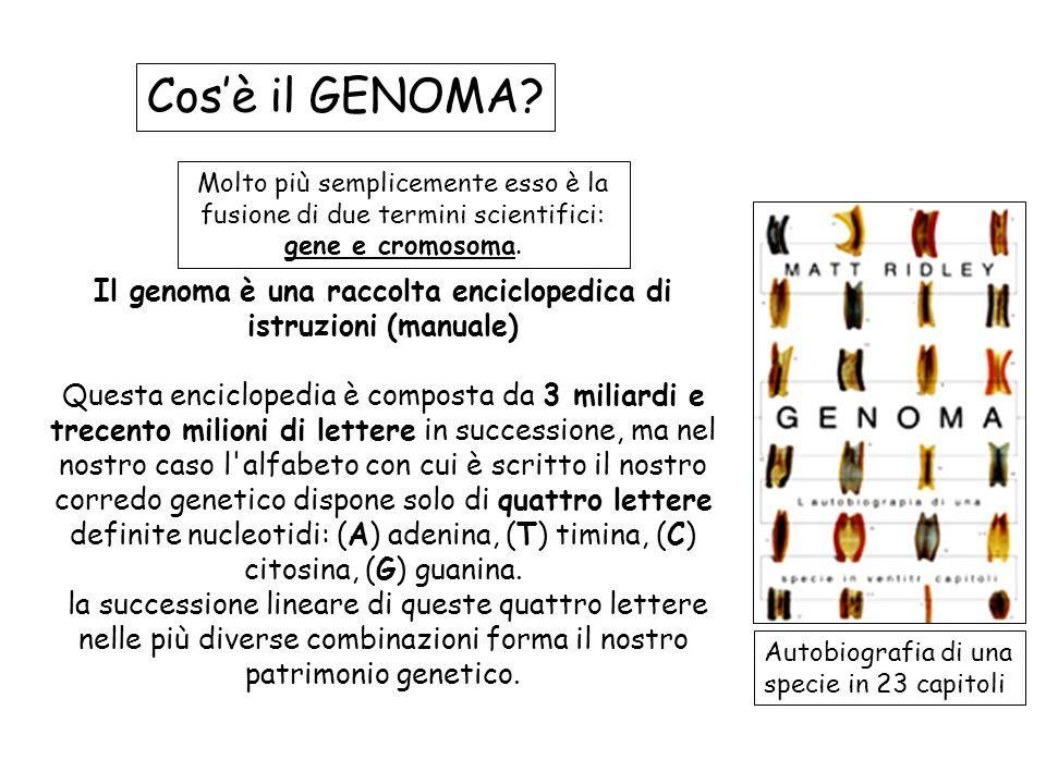 Il genoma è una raccolta enciclopedica di istruzioni (manuale)