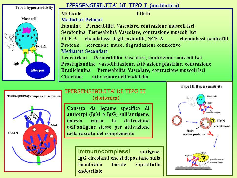 IPERSENSIBILITA' DI TIPO II