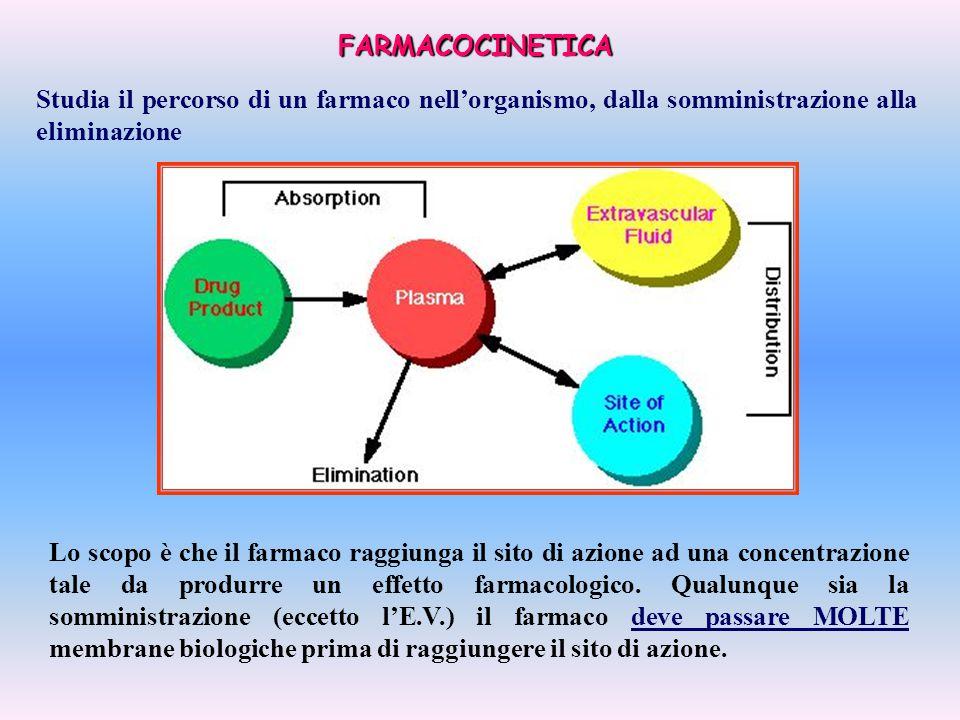 FARMACOCINETICA Studia il percorso di un farmaco nell'organismo, dalla somministrazione alla eliminazione.