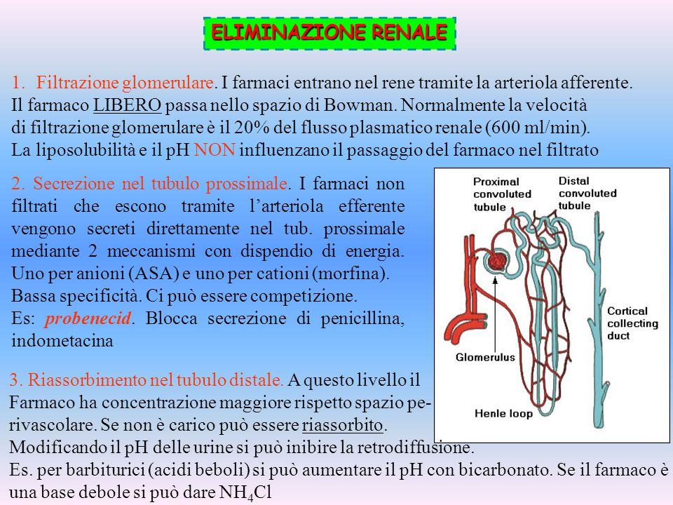 ELIMINAZIONE RENALE Filtrazione glomerulare. I farmaci entrano nel rene tramite la arteriola afferente.