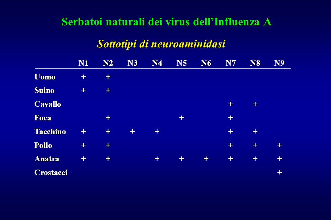 Serbatoi naturali dei virus dell'Influenza A