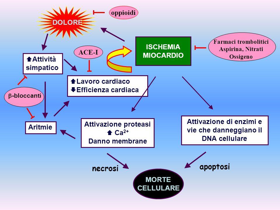 Attivazione di enzimi e vie che danneggiano il DNA cellulare