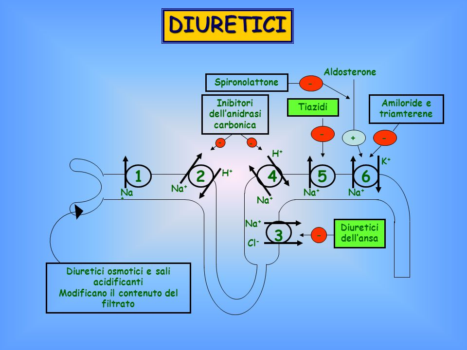 DIURETICI 1 2 3 4 5 6 Diuretici osmotici e sali acidificanti